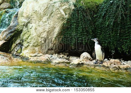 Cute little penguin standing near water and looking away in a zoo