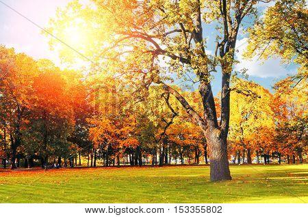Autumn picturesque landscape - sunny autumn landscape park lit by sunshine-autumn park in sunshine. Sunny autumn landscape of autumn park with golden trees. Autumn park landscape in sunny light