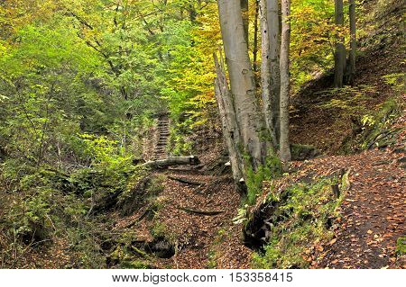 Road and stairs in deep forest hill-side at autumn