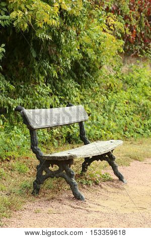 Wooden bench in the forest, close up