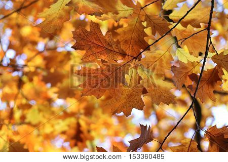 Beautiful autumn branches soft focus nature background