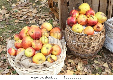 ripe red apples in a wicker basket and drawer