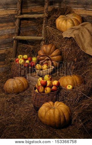 ripe pumpkins on bales of straw and apples in a wicker basket in an old barn