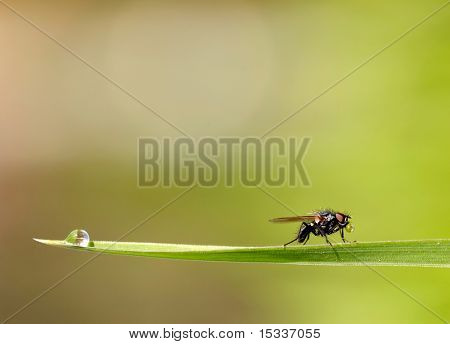 Big eyed fly on the grass