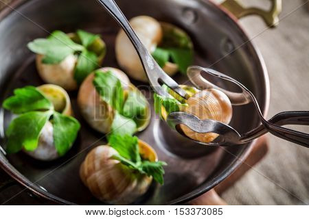 Closeup of eating roasted snails with butter made of garlic