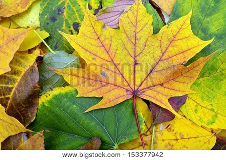 autumn season leafs background fall texture colors
