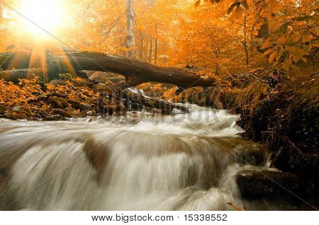 Autumn landscape with trees, river and sun