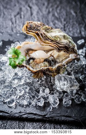 Closeup of delicious oyster in shell on ice