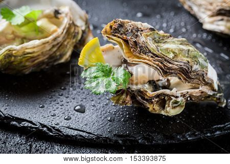 Freshly Caught Oyster In Shell On Black Rock
