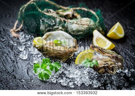 Tasty Oysters On Black Rock Ready To Eat