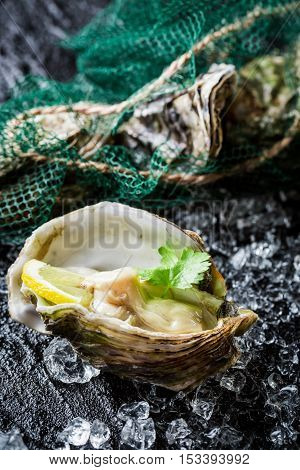 Tasty Oyster In Shell On Crushed Ice With Lemon
