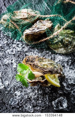 Delicious Oyster In Shell On Ice Ready To Eat