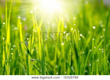 Green grass sunset