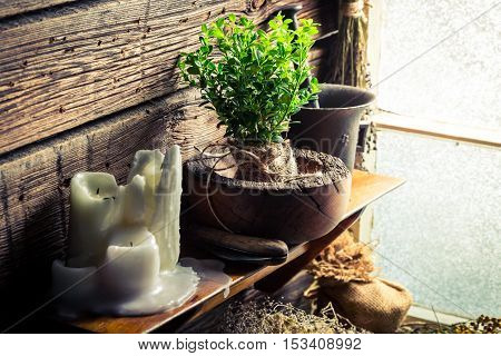 Small Seedling Of Tree In Wooden Mortar On Shelf