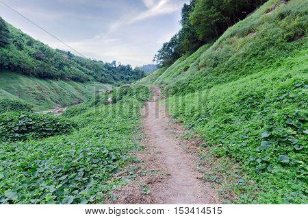 Summer landscape with mountain path through the field turns uphill to the sky at an island near Khun Dan Dam Nakohn Nayok Thailand