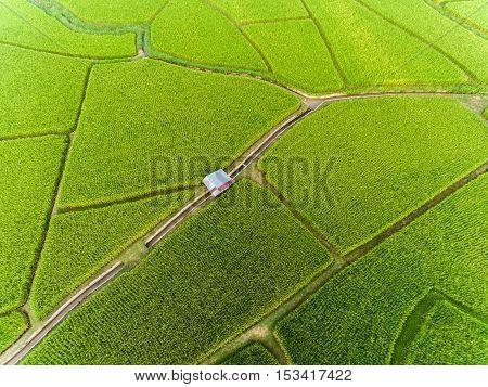Rice farm Map Bird Eye View, Thailand