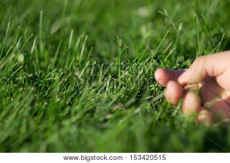 Hand on the Grass in Beautiful day Relax Day Relax Hand on the Grass Hand with Sunny Day