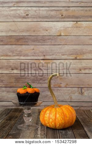 Pumpkin muffin with ornamental fall gourd on wooden backdrop