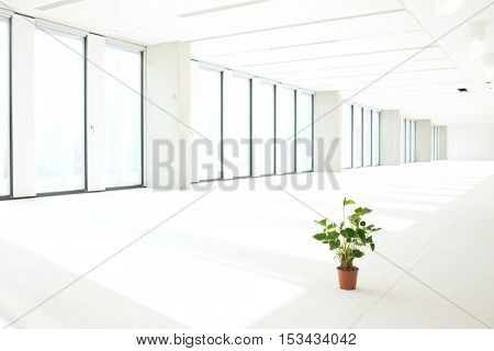 Potted plant in empty office