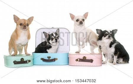 cardboard box and chihuahua in front of white background