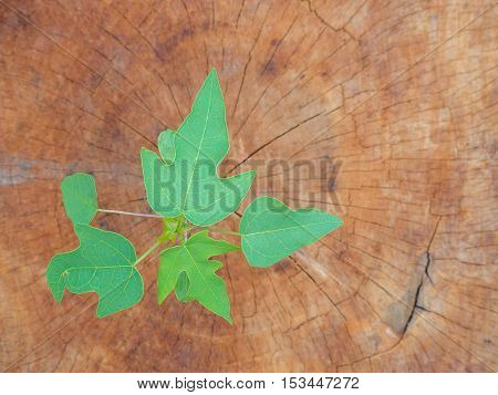 Seedling growing in a timber Focus on seeding
