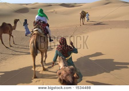 Riding Camels In The Dunes, Jaisalmer Desert, India