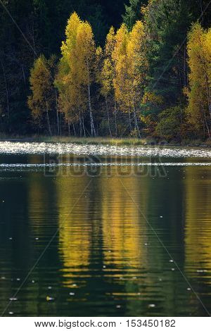Autumn with the yellow foliage reflected in Lake Saint Ann
