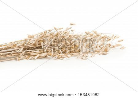 oats spikelets  isolated on white background cutout