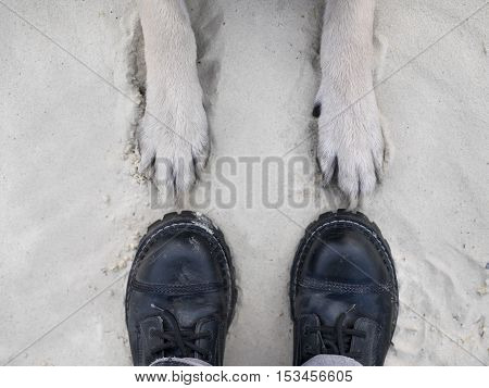 Human feet wearing boots and legs of a dog on the sand pointed to each other overhead shot concept of togetherness