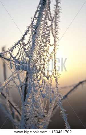 early morning fogfrost in the fieldfrost on green plantsspring background of fog and frostcobwebs in the frost
