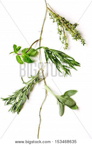 mint, sage, rosemary, thyme - tufts of herbs white background top view