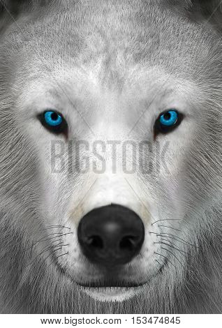 3D rendering of a head of an arctic wolf closeup