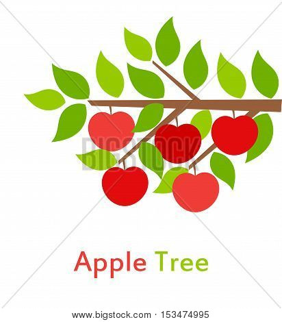 Apple tree branch with leaves and fruits illustration