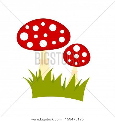 Toadstool mushrooms isolated on white background illustration