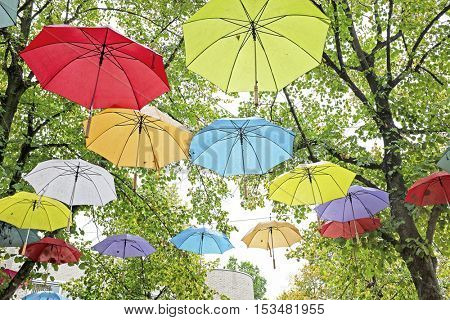 Umbrellas in fall in the trees in the Netherlands