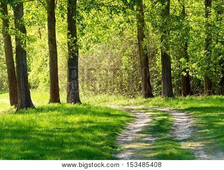 Forest road in the hungarian rural. Summer season landscape. Green grass and trees.