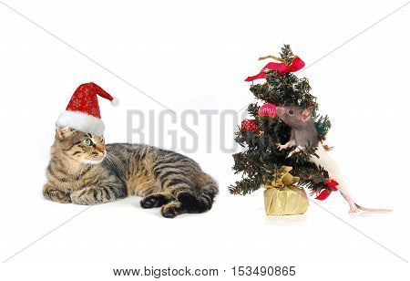 Christmas Santa Cat And Rat