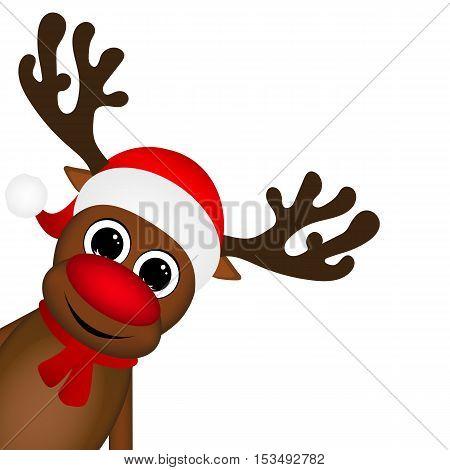 Reindeer peeking sideways on a white background