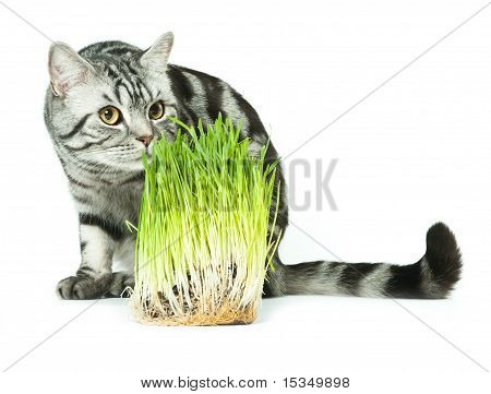 Cat and grass