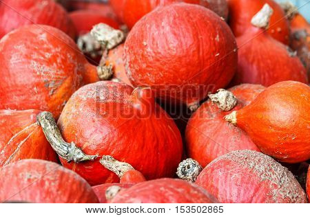 Freshly harvested red kuri squash at a farm