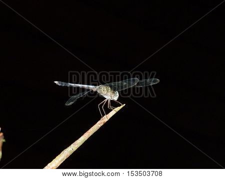 Dragonfly perched on a branch in the jungle