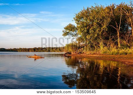 Driftwood in the water at a lake in Oklahoma.