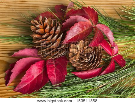 Bright red leaves and cones. Autumn mood.