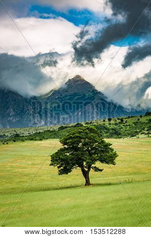 One Tree On Background Of Mountains In Umbria, Italy