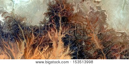 Autumn Stone tree plant fantasy, Abstract photography of landscapes of deserts of Africa from the air