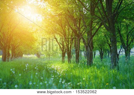 Grass between the trees on a sunny spring day