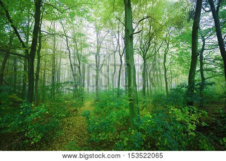 Foggy day in green forest