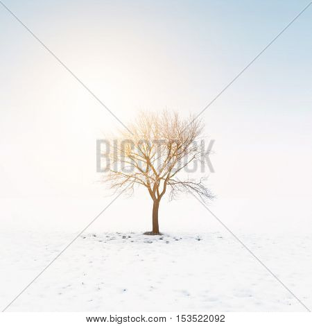 Tree in snow on a sunny day