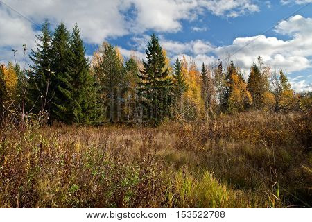 Day in autumn forest in Sunny weather on a meadow