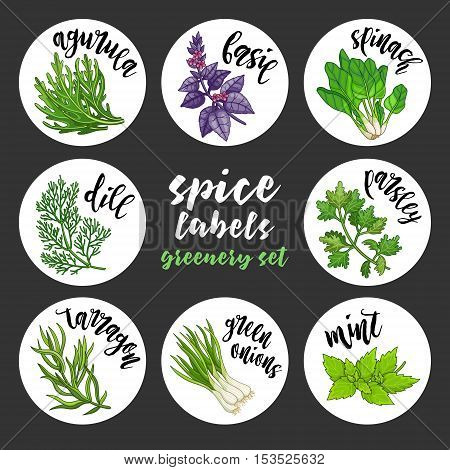 Spices and herbs jar labels and stickers. Colored vector condiment greenery set with arugula, basil, spinach, dill, parsley, tarragon, green onions, mint. Botanical illustrations